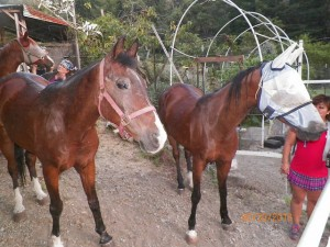 861horses